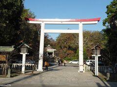 鎌倉宮  鳥居の両脇に河津桜の木があるのですが、 こちらも蕾は硬いままでした。 鎌倉で桜の狂い咲きを見るのは難しそうです。