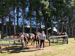 Westray Horse Treks