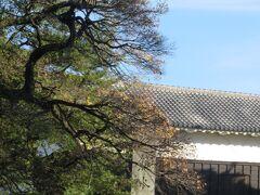 熊本城・・・まだまだ震災の爪痕残る熊本城  今は遊歩道歩いて外側から眺めるしかできませんが、それでも復興の兆し感じる、これからの希望感じさせてくれるスポット
