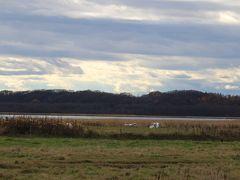 濤沸湖 この頃は白鳥が飛来しないそうです 何か飛んでいく~、わー「たんちょう」だ!