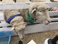 美味しいものを食べた後は、恵庭市のえこりん村へ  はじめに『みどりの牧場』へ  羊のレースを観てきました