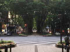 今回は仙台駅周辺で用事があったため、そこまで観光もできず、どこか近場の散歩スポットはないか探したところ、良い感じのケヤキ並木を発見。