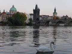 白鳥とカレル橋