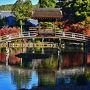 無際橋は夢窓国師により 水月場が建てられた1314年頃に架けられたと思われます? 度々架け替えられ、1800年代以降には中央に亭舎が設けられました。 今回の解体修理は昭和62年と同様に大規模なものですから、 池の水を抜き、橋全体に足場を組み、仮屋根で覆われました。