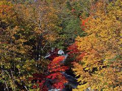 更に進むと阿寒湖近くの滝見橋です。 阿寒の紅葉はこちらが基準になっているようで、滝を中心に見事な眺めが見れます。