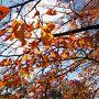 秋の散策!西国三十三ケ所総持寺~茨木神社~うつわのカモシカ雑貨店