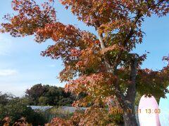 11月21日(水)  紅葉の時期に車でお遍路の旅です。  12時に自宅を出発。  3月18日に新名神が全線開通したので、新御堂筋から箕面有料道路  (箕面グリーンロード)を通り箕面とどろみICで新名神に入ります。  三木サービスエリアで1回目のトイレ休憩。