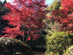 公園の中の散策路、特に池の周囲の紅葉がきれいでした。
