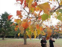 奈良公園、鹿が多すぎですね。