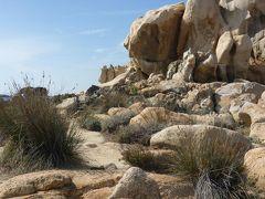 岩場でオコジョが横切るのを見ました。