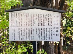 稲毛神社 御神木大銀杏と十二支めぐり