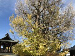 ベストタイミングではないとはいえ、樹齢1,200年のいちょうの巨木。 迫力があります。
