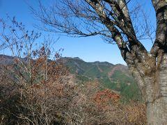 伊豆ヶ岳山頂到着、大持山方面の眺め。山頂の桜は、すっかり葉を落としていました。