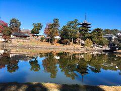 【猿沢の池】 東大寺を後にして、車は興福寺に向かいます。すでに予定の時間近くになったので、興福寺は写真だけ。猿沢の池も紅葉が美しい。