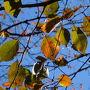 母とはよく出かけても、父と出かけることは滅多になく…しかも、3人だけで出かけるなんて、いつ以来か?…もしかしたら初めてかも?!と思うくらい記憶にない(笑)  桜の名所の大宮公園。桜の葉はこんな状態でほとんどは落葉してました。