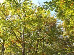 私の大好きな場所の一つ、山古志闘牛場(   http://yamakoshi.org/culture/tsunotsuki/   )近くのブナ林です。