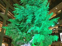 群馬県妻恋村の高さ14.5mの本物のモミの木を使った大きなクリスマスツリー。 1階のアトリウムが華やかになります。