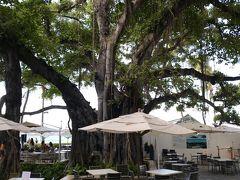 Beach Bar  今回は残念ながらお休み もちろん、ザベランダもね~~  モアナ、ピンク、ハレクラニとバーをハシゴする予定でしたがガラガラと崩れた ドンマイ 私