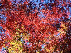 12月も中旬なので紅葉には遅いと思われたので近場の林試の森公園に行ってみました。