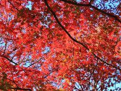 プラタナス並木はすっかり落葉していましたが、もみじはまだ紅葉が綺麗でした。