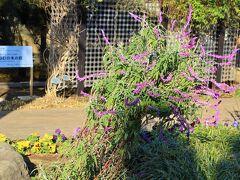 池田山公園の前にその近くにあるねむの木の庭へ。 ねむの木の庭は、皇后陛下のご実家・旧正田邸の跡地に整備した公園であり、園名は皇后陛下の高校生時代に作られた詩からつけられたものです。