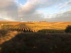 シャンパーニュ地方で移動中の車窓から… 黄金色のぶどう畑。
