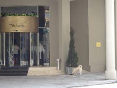 高級ホテルに入ろうとして追い払われたワンコ。首輪つけてるし、きれいだから飼い犬だと思いますが、ご機嫌でウロウロしていました。