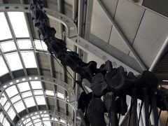 翌日は午前の便で帰国です。 出国手続きをすませると、広い空間に恐竜の化石が。 フィールド博物館を思い出します。