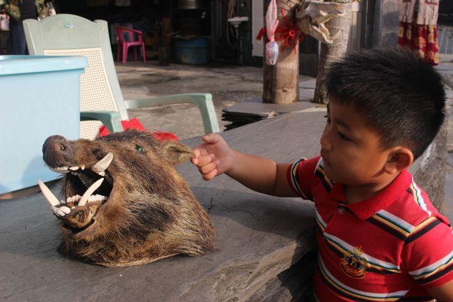 イノシシの牙をたくさん飾っている家には、剥製も。<br />この家の子どもが剥製で遊んでいる。<br /><br />怖くないのが既にすごい。