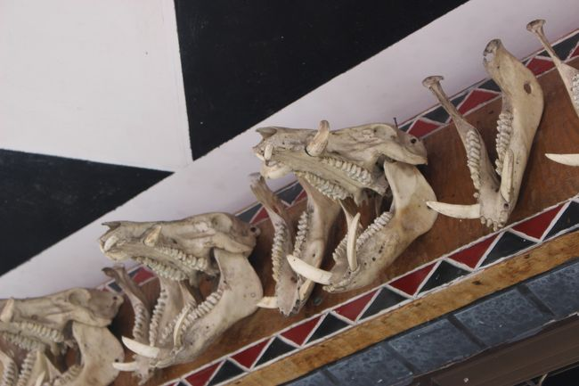 このイノシシの骨を飾る意味がわかると、また違って見える。