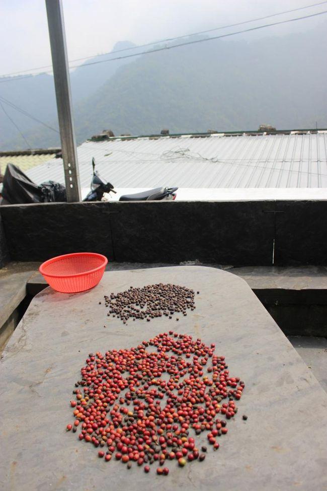 里芋だけでなく<br /><br />コーヒー豆も干していました