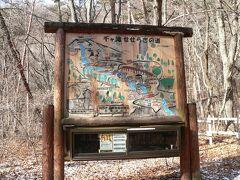 前回 到達できなかった千ヶ滝せせらぎの道に来ました。  景勝地千ケ滝の滝壷まで続く2.5Kmの大樹に囲まれた遊歩道です。