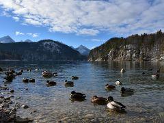晴れた日のアルプ湖は最高にキレイ! 鳥もなついててあまり逃げない