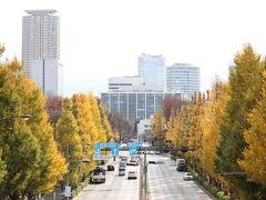 外苑前駅から信濃町駅へ戻り、再度、外苑東通りの歩道橋を渡りました。 歩道橋からのイチョウ並木。  2時間ほど散策し紅葉を楽しんできました。