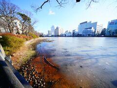 久保田城 中土橋門跡へ。 秋田駅の周辺は全く雪が無く、同じ秋田でも田沢湖方面とこんなにも違うんだな~と思っていましたが、池はすっかり凍っていました。 池の脇に枯れた蓮の花弁がいっぱいありました。