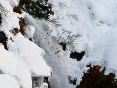 午前中の白銀の滝 遊歩道が雪で埋もれていて、近くまで行けませんでした。
