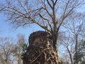 コーケー遺跡群に到着してからすぐご案内する遺跡で、プラサットプラムと言います。プラムとは5つという意味で立っている塔が5つあるので、そういう名前が付けれられました。プラサットプラムというのは塔が5つある遺跡という意味です。本当は三つの塔は本殿のようで、後2個は左右対称に造られた経蔵で、一個の塔はラテライトという赤い石で造られました。全体にコーケー遺跡群で保存状態が一番いいです。