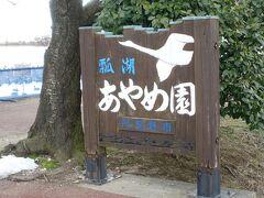 目的地は『瓢湖』 6月中旬~6月下旬には215種類50万本のあやめが見頃なんだって  そのあやめ園の看板にも鶴の絵が  そう、ここは冬になると5000羽の白鳥が飛来してくるという 白鳥の名所なのです。