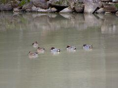 池には鳥もスイスイと遊んでいます。。 奈良公園は何処ものんびりしています