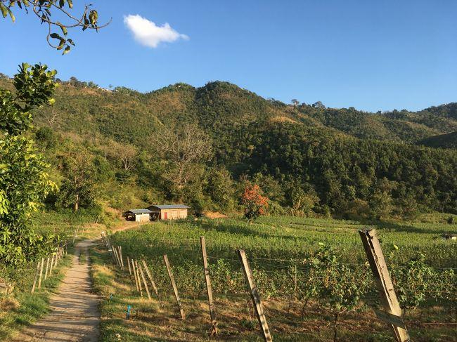 大農場。一面ブドウ畑。