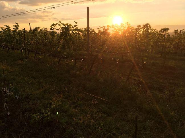 バガンの夕日の方が感動的だな。<br />遺跡と夕日の組み合わせが感動的だったんだろうな。ブドウ畑と夕日の組み合わせが、私の琴線を揺さぶらなかっただけだけど。<br />あれだな、先にいいもん見てしまうと、感動の引き算をしてしまう。<br />あかんな、もったいない。<br /><br />それにしても太陽の力が強い。顔が焼けてきた。戻ろう。運転手さんもまたせていることだし。<br /><br /><br />