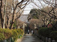 宝戒寺 参道  こちらも梅の花が楽しめるのですが、さて、どうでしょうか?