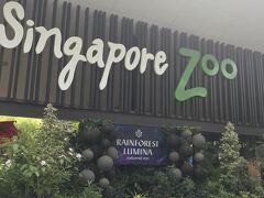ラッフルズプレイスから電車に乗り、Khatibで降りました。 Exit Aから出て左手側に歩いていくとMandai Khatib Shuttleの乗り場があります。 このShuttleバスでシンガポールズーに行きました。 15分程度で動物園に到着です。