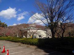 早めに自宅を出て真鶴ブルーラインと熱海ビーチラインというふたつの有料道路を駆使して静岡県に入り、熱海梅園に到着。  しかし!  すでに既存の有料駐車場は満車で入れません。  まだ10時を少し回ったばかりの平日ですがーー!  仕方ないので梅園の上のほうにある民間の駐車場に止め、澤田正廣記念美術館の入り口から入場します。