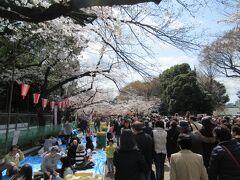 上野公園までやってきました。ここはさすがに花見のメッカです。