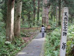 天然記念物の爺杉