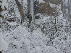 雪の中のブライダルベール 検索しても、こんな写真ありません。かなりレアなのかな。