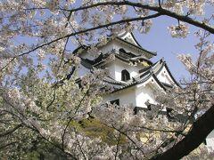 【彦根城①】 国宝・彦根城天守の桜 http://www.hikoneshi.com/jp/castle/ (2002年4月5日撮影)