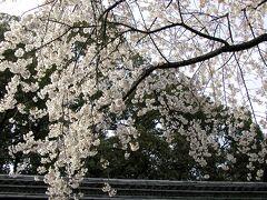 【平野神社の桜①】(京都市北区平野宮本町) 平野神社本殿は重要文化財です。 http://www.hiranojinja.com/ (2002年3月25日撮影)