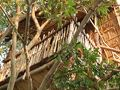 ホテルのプールサイドにあるツリーハウスからシギリヤロックがよく見えました。